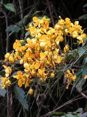 Visiting the Amazon in Ecuador: Beautiful flowers enlighten Amazon visits in Ecuador.