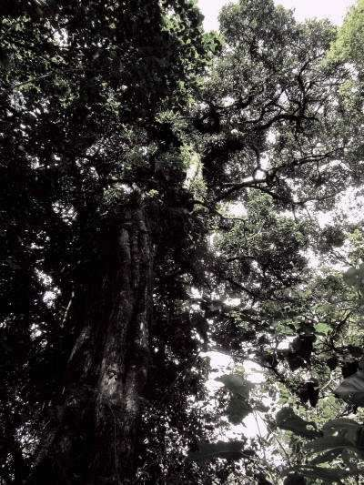 Cuyabeno Faunistic Reserve: Trees in the Amazon Rainforest.
